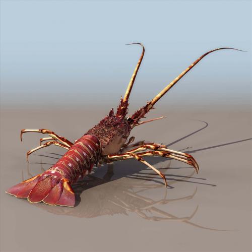 龙虾模型3DMAX